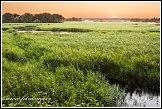 Řeka Narew u vesnice Kruszewo, Narwianski národní park, Narwianski Park Narodowy, Polsko