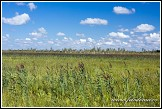 Dluga Luka, bažiny Bagno Lawki, Biebrzanski národní park, Biebrzanski Park Narodowy, Polsko