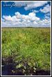 Grobla Honczarowska, bažiny Bagno Lawki, Biebrzanski národní park, Biebrzanski Park Narodowy, Polsko