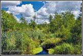 Bažiny Bagno Podlaskie, Biebrzanski národní park, Biebrzanski Park Narodowy, Polsko