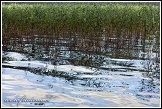 Hladina jezera u poloostrova Lysocha, jezero Wigry, Wigierski Park Narodowy, Wigierski národní park, Polsko