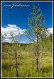 Bažina u Zatoka Slupianska, jezero Wigry, Wigierski Park Narodowy, Wigierski národní park, Polsko
