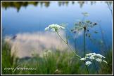 Okolíky u jezera Suchar Rzepiskowy, Wigierski Park Narodowy, Wigierski národní park, Polsko