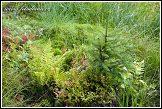 Přírodní zátiší u jezera Suchar Rzepiskowy, Wigierski Park Narodowy, Wigierski národní park, Polsko
