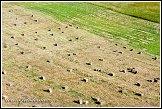 Pole u jezera Wigry, Bryzgiel, Wigierski Park Narodowy, Wigierski národní park, Polsko