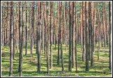 Les v národní přírodní rezervaci Čepkeliai, Litva