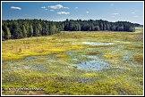 Močál v národní přírodní rezervaci Čepkeliai, Litva