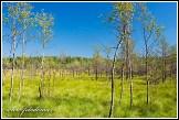 Národní přírodní rezervace Čepkeliai, Litva