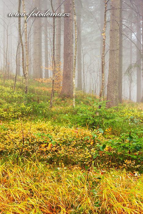 Podzimní les, Petrovy Boudy, Zlaté Hory, okres Jeseník