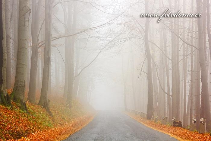 Podzimní bukový les kolem cesty, Zlaté Hory
