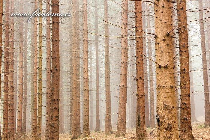 Smrkový les, Rejvíz
