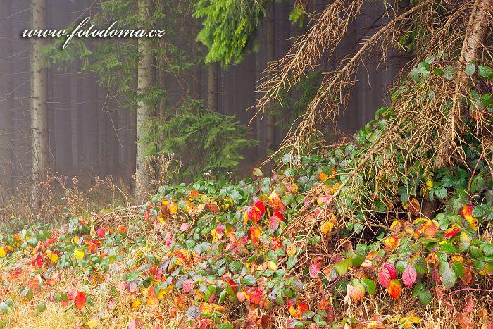 Okraj lesa, Rejvíz, CHKO Jeseníky, okres Jeseník