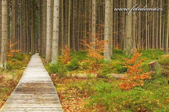 Naučná stezka, Národní přírodní rezervace  Rejvíz, CHKO Jeseníky
