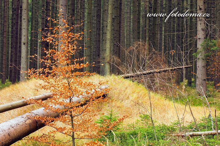 Národní přírodní rezervace  Rejvíz, CHKO Jeseníky