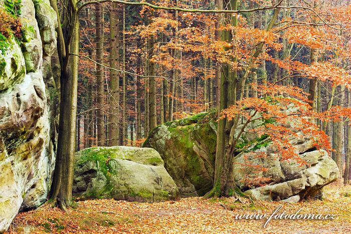 Kamień Popielny, Národní park Gór Stołowych, Polsko