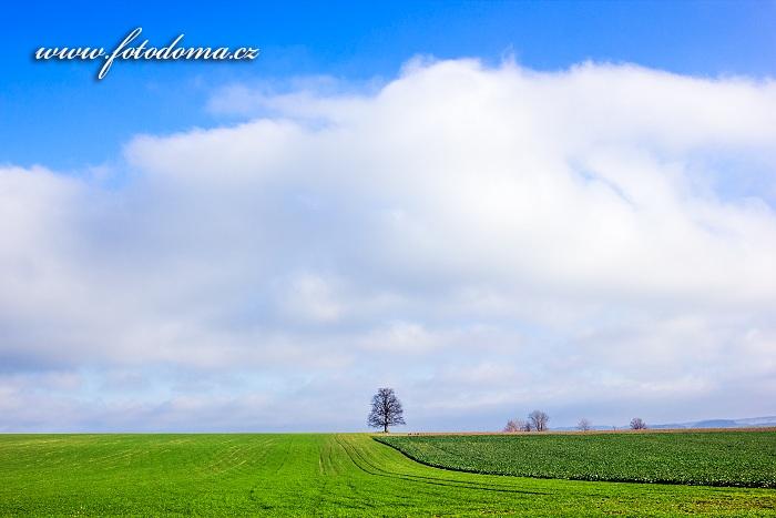Krajina se stromem, Petrovičky, Velké Petrovice, okres Náchod, Královéhradecký kraj, Česká republika