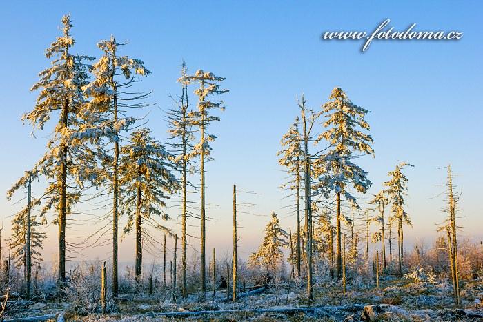 Zimní les, Lisi Grzbiet, Národní park Gór Stołowych, Polsko