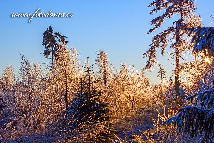 Zimní les, Lisi Grzbiet, Národní park Gór Stołowych