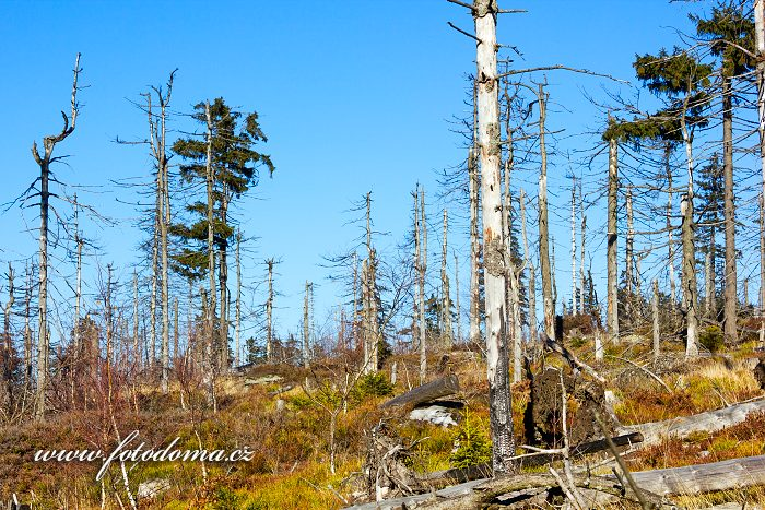 Mrtvý les, Lisi Grzbiet, Národní park Gór Stołowych