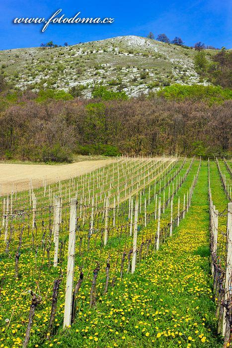 Vinohrad pod Pálavou, Pavlov, CHKO Pálava, okres Břeclav, Jihomoravský kraj, Česká republika