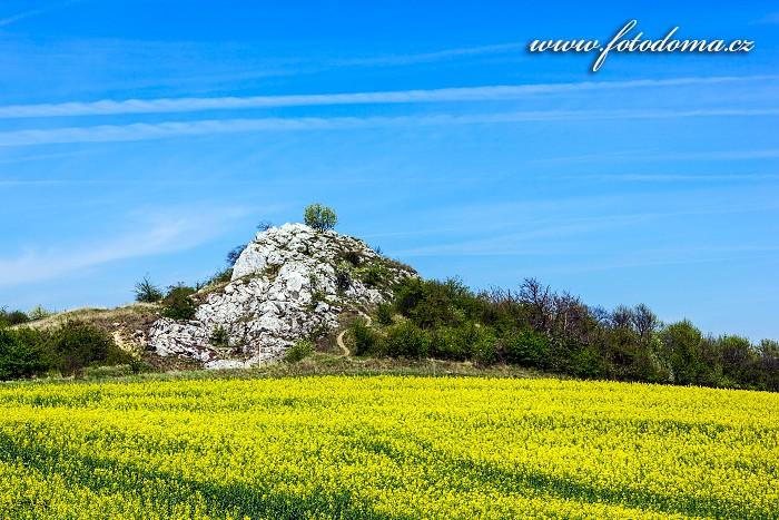 Přírodní památka Kočičí skála, CHKO Pálava, okres Břeclav, Jihomoravský kraj, Česká republika