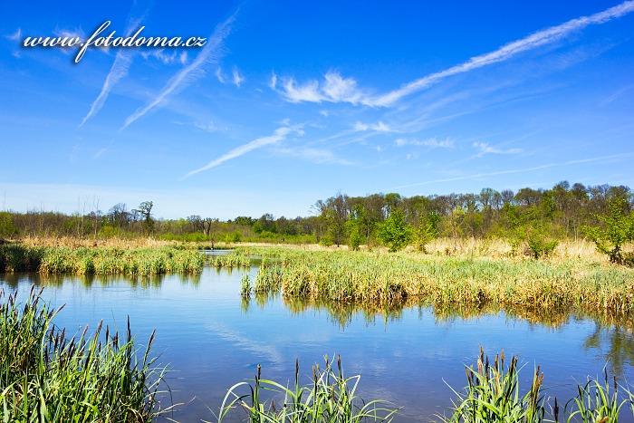 Slepá ramena řeky Dyje, Přírodní park Niva Dyje, okres Břeclav, Jihomoravský kraj, Česká republika