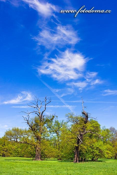 Louka se starými stromy u Lednice, Přírodní park Niva Dyje, okres Břeclav, Jihomoravský kraj, Česká republika