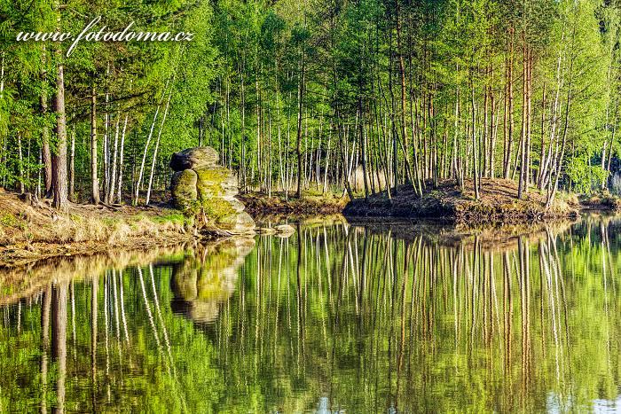 Rybník U dubu, Kobylá nad Vidnavkou, okres Jeseník, Olomoucký kraj, Česká republika