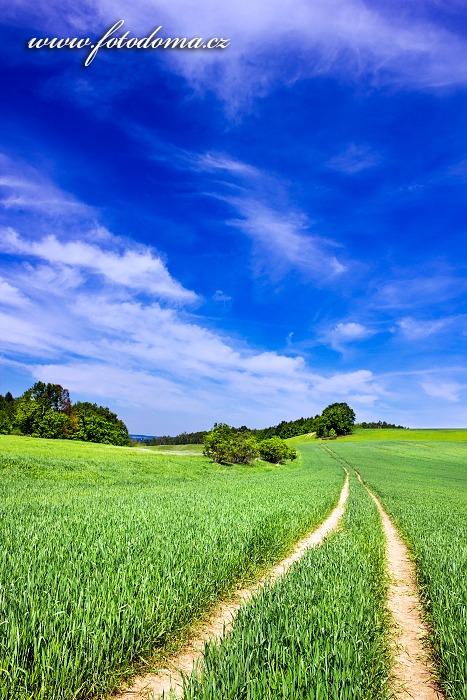 Vrch Hrouda, asi kilometr severně od obce Velká Kraš, Velká Kraš, okres Jeseník, Olomoucký kraj, Česká republika